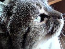 Cat. S eye green makro stock images