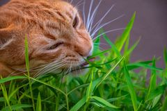 Cats in gestures. royalty free stock images