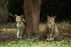 Cat. S are waiting they dinner in park Stock Photography