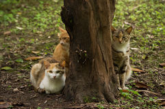 Cat. S are waiting they dinner in park Royalty Free Stock Images