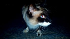 Cat& x27 ; cauchemar de s Images libres de droits