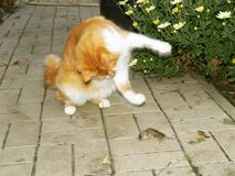 Cat caught a mouse Royalty Free Stock Photos
