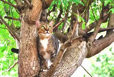 Cat caught on the tree. stock image
