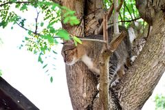 Cat caught on the tree. royalty free stock images
