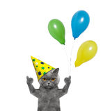 Cat celebrating birthday with balloons. Isolated on white background Stock Photo