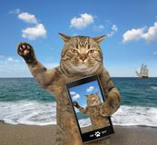 Cat with a cell phone. The cat with a cell phone is on a beach stock photos