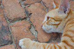 Cat  on cement floor Royalty Free Stock Image