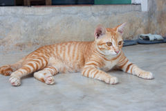 Cat  on cement floor Royalty Free Stock Images