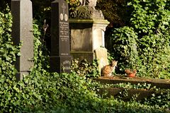 Cat on cemetery Royalty Free Stock Images