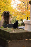 Cat cemetery. Cat sitting on a grave in a cemetery in Paris Stock Image