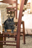 Cat on chair. Beautiful cat on a chair at the beach Royalty Free Stock Photos