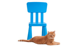 Cat and chair Royalty Free Stock Photos