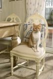 Cat on the chair Royalty Free Stock Photos