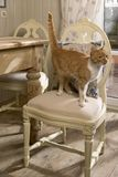 Cat on the chair stock images