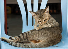 Cat on chair Stock Images