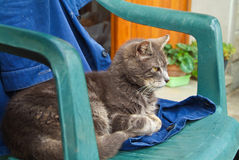 Cat on a chair Stock Photography