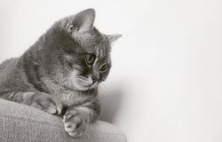 Cat on Chair Staring on Wall Stock Photo