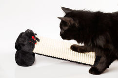Cat chasing a mouse Stock Images