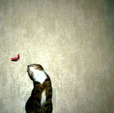 Cat chasing a toy. Domestic cat staring at flying feather Stock Image