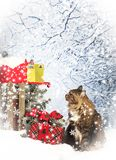 Cat Checking Mailbox for Christmas Cards stock photos