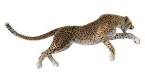 Cat Cheetah grande imagenes de archivo