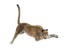Cat Cheetah grande foto de archivo
