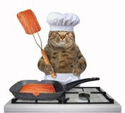 Cat is cooking salmon royalty free stock photo