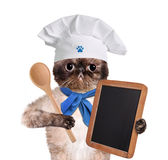 Cat chef. Stock Photography
