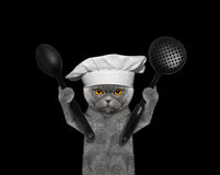 Cat chef is going to prepare meals Royalty Free Stock Image
