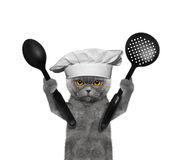 Cat chef is going to prepare meals Stock Photography