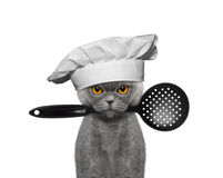 Cat chef holding a spoon in his mouth Stock Images