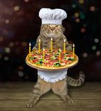 Cat chef with holiday pizza 2. The cat chef holds a holiday pizza with candles. Dark background stock image