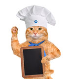 Cat chef. Royalty Free Stock Images