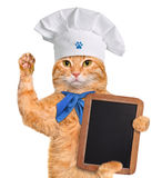 Cat chef. Stock Images