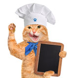 Cat chef. Stock Photo