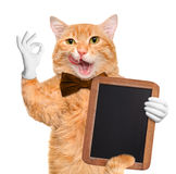 Cat chef. Royalty Free Stock Photography