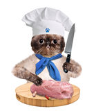 Cat chef Stock Image