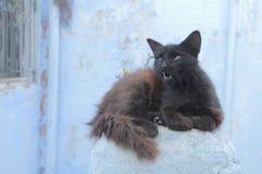 Cat Chefchaouen Marocko Royaltyfri Bild