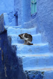 Cat in Chefchaouen, Morocco Royalty Free Stock Photography