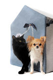 Cat and chihuahua Royalty Free Stock Photos