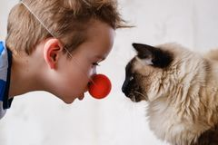 Cat child balinese together play. caucasian royalty free stock photography