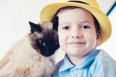 Cat child balinese together play. friendship companion. Cat child balinese together play kid happy. friendship companion royalty free stock image