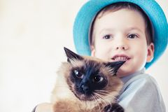 Cat child balinese together play. love companion. Cat child balinese together play kid happy. love companion stock photography