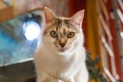 Cat in the children`s room. A domestic cat sitting in a children`s room, near the aquarium Stock Image