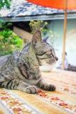 Cat Chilling Out On Dinner-Lijst stock fotografie