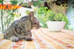 Cat Chilling Out On Dinner-Lijst royalty-vrije stock afbeeldingen