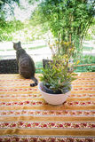 Cat Chilling Out On Dinner-Lijst stock foto's