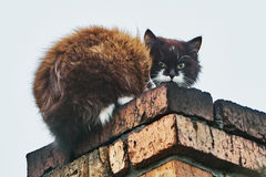 Cat on the chimney Royalty Free Stock Image