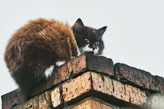 Cat on the chimney Royalty Free Stock Images