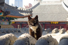 A cat on a Chinese temple roof Royalty Free Stock Photo